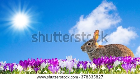 Easter rabbit in a flower field - stock photo