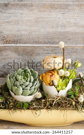 Easter table decoration with succulents and ranunculus flower, copy space, wooden background - stock photo