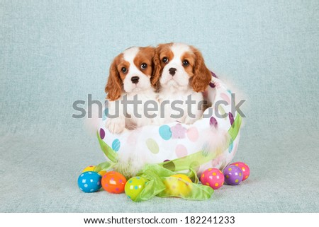Easter theme Cavalier King Charles Spaniel puppies sitting inside round fabric Easter egg with easter eggs on light green blue background  - stock photo
