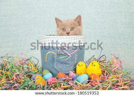 Easter themed kittens sitting inside denim tube with fluffy chicks and easter eggs on light green blue background - stock photo