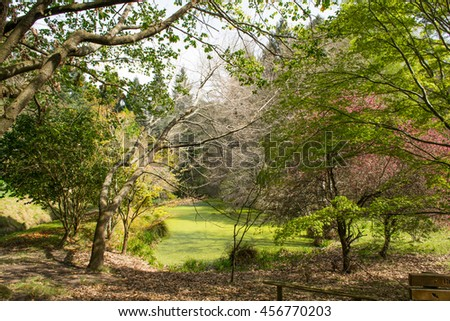 Eastwood Hill in colour, New Zealand - stock photo
