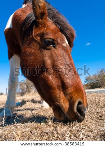 Eating horse - stock photo