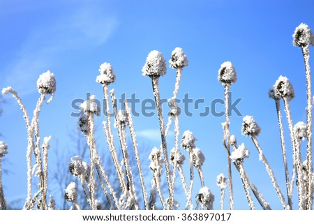 Echinacea winter on a background of blue sky. - stock photo