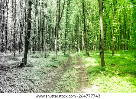 Eco forest concept - stock photo