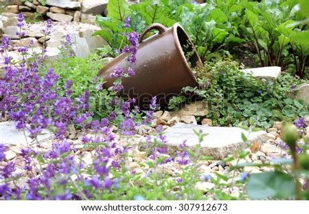 Eco-friendly, herbal formal garden backyard. Lying stoneware with Glechoma hederacea and catnip on the gravel path. - stock photo