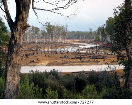 eco-vandalism in Tasmanian forests 3 - stock photo