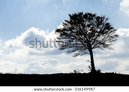 Ecology concept: a silhouette tree in the horizon line. Blue sky with clouds background - stock photo