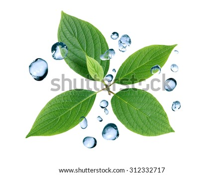 Ecology concept. Abstract composition with green leaves and water drops - stock photo