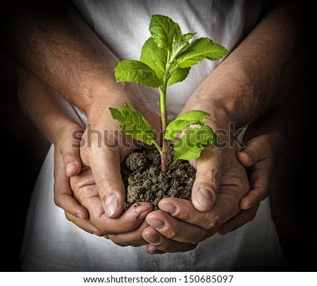ecology concept - old and young hands with a tree - stock photo