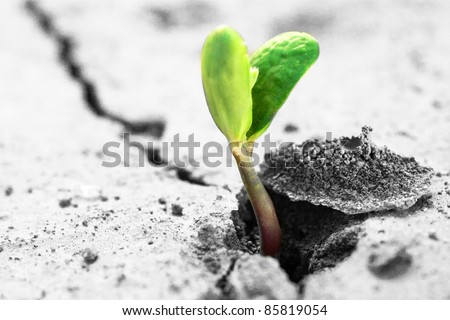 Ecology concept. Rising sprout on dry ground. - stock photo