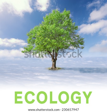 Ecology concept - Single tree with green leaves above the clouds at idyllic sunny day - stock photo
