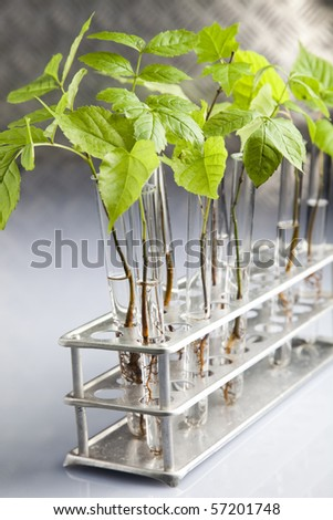 Ecology laboratory - stock photo
