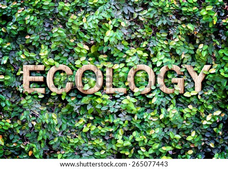 Ecology made of wood word on leaves wall,Eco concept. - stock photo