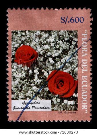 ECUADOR - CIRCA 1998: A 600 sucre stamp printed in Ecuador shows the two red roses in a bed of white Gypsophila paniculata, Flora del Ecuador series, circa 1998 - stock photo