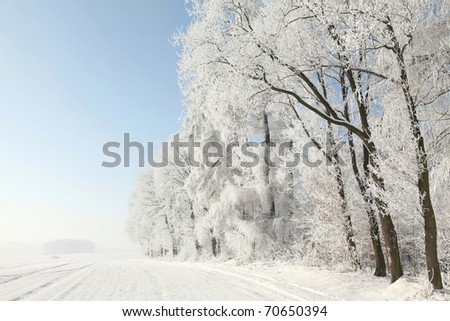 Edge of the forest with trees covered in frost on a cloudless morning. - stock photo