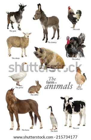 Educational poster with farm animal in English - stock photo