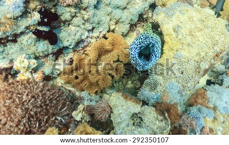 Eel Mouth - stock photo