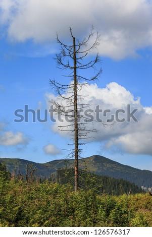 Effect of environmental pollution - a dead tree. Tatra Mountains, Poland. - stock photo