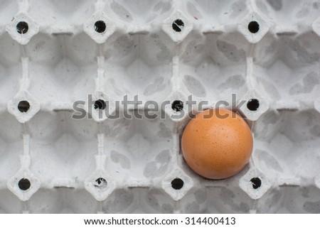 egg in an egg carton - stock photo