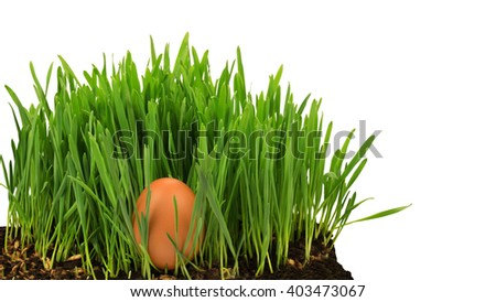 Egg in growing grass isolated at white background - stock photo