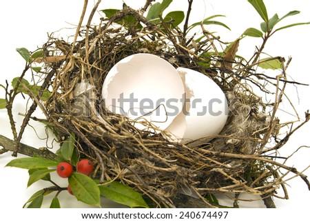 Egg Shell In Bird Nest On White Background - stock photo