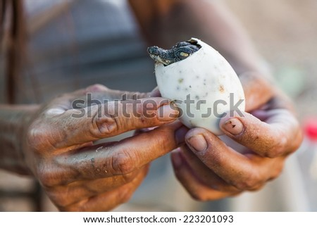 egg with a crocodile cub in the hands - stock photo