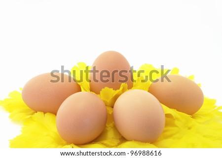 Eggs Easter symbol holiday decor - stock photo
