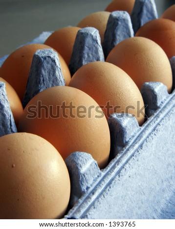 Eggs in carton - stock photo