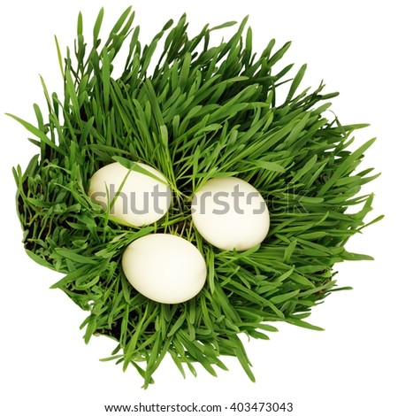 Eggs in growing grass isolated at white background - stock photo