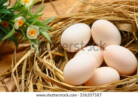 eggs in nest on the nature, Fresh eggs for cooking or raw material, fresh eggs background. - stock photo