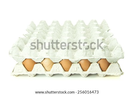 Eggs in paper tray isolated on white Background. - stock photo