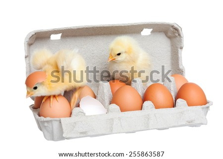 Eggs in the package with cute chick in move - stock photo