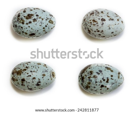 Eggs of  the Great Reed Warbler (Acrocephalus arundinaceus). - stock photo