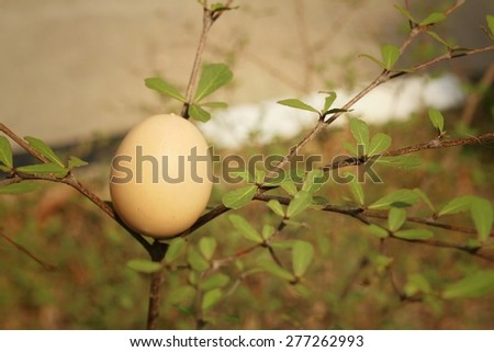 Eggs on a tree at the park. - stock photo