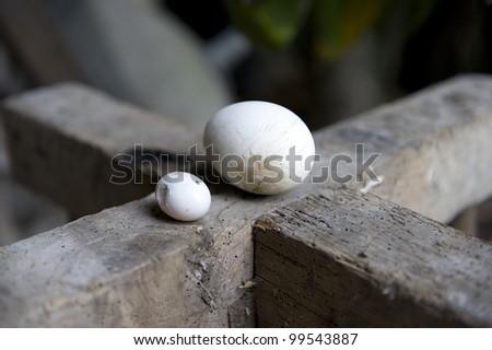 Eggs on wood - stock photo