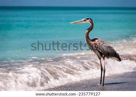 Egret in the Surf - stock photo