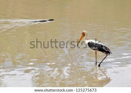 egret in wetland pond - stock photo