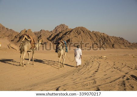 Egypt desert in middle east with camels and Arabian guy - stock photo