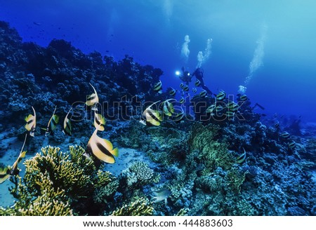Egypt, Red Sea, Hurghada, U.W. photo, Masked Butterflyfish (Chaetodon semilarvatus) and a divers - FILM SCAN - stock photo