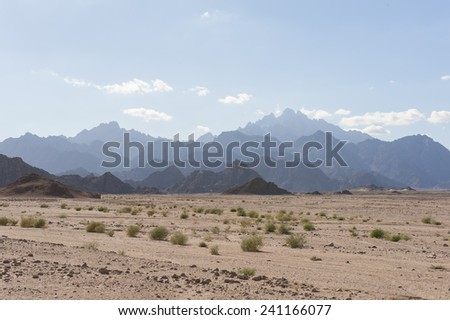 Egyptian rocky desert landscape with plants and mountain range - stock photo