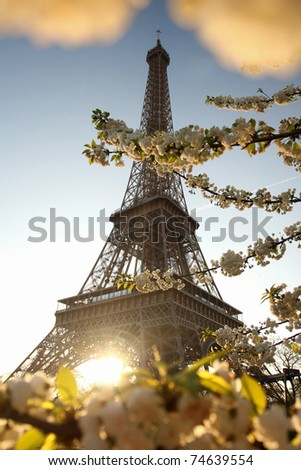 Eiffel Tower against blossoming tree in morning sun - stock photo