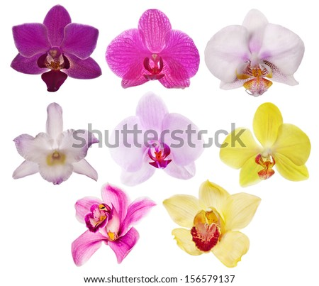 eight orchid flowers isolated on white background - stock photo