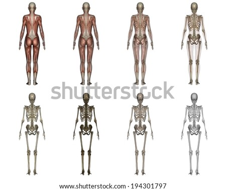 Eight stages of the human body going to skeletal form. - stock photo