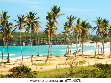 El Macao beach, palm forest and ocean cliffs - stock photo