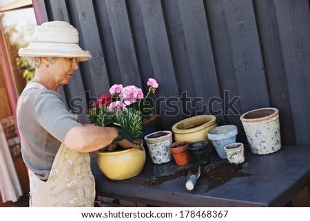 Elder woman wearing sun hat planting new plants in terracotta pots on a counter in backyard. Senior female gardener working in backyard - stock photo