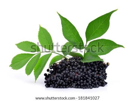 Elderberry ( Sambucus nigra ) isolated on white - stock photo