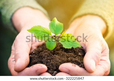 Elderly lady holding a handful of dirt with tiny plant in it. - stock photo