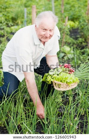 elderly men in garden - stock photo