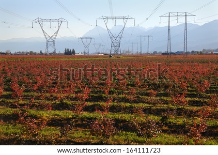 Electrical Transmission Towers and Lines. Electrical transmission towers with high voltage lines run through agricultural land in the Fraser Valley, British Columbia, Canada.  - stock photo