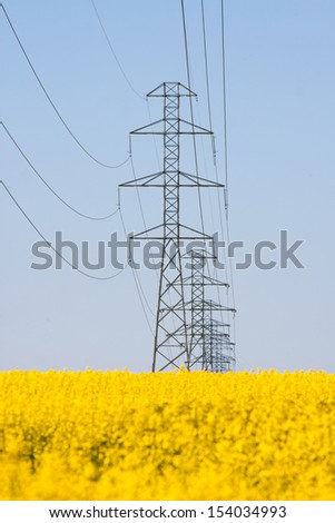 Electricity pylons in a field of rape  - stock photo